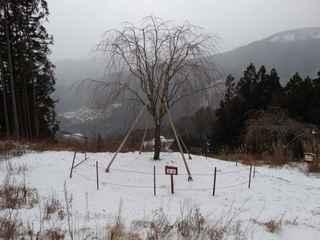 2021雪景色4.JPG