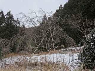 2021雪景色5.JPG