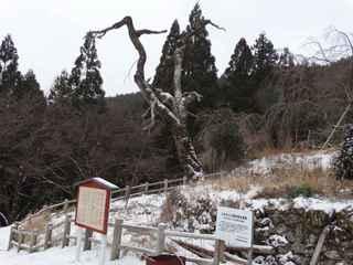 2021雪景色6.JPG