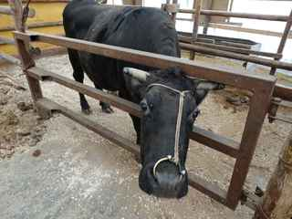 牛舎2.JPG