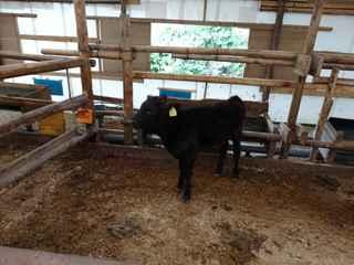 牛舎3.JPG