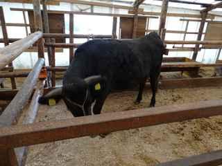 牛舎4.JPG