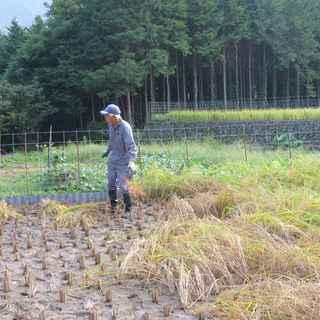 田んぼの学校稲刈り1.JPG