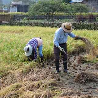 田んぼの学校稲刈り2.JPG