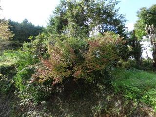 秋の花桃の里4.JPG