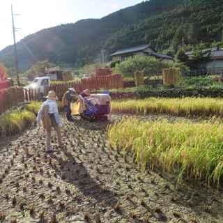 稲刈り本番1.JPG