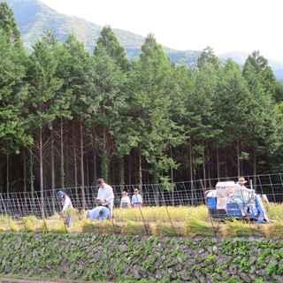稲刈り本番2.JPG
