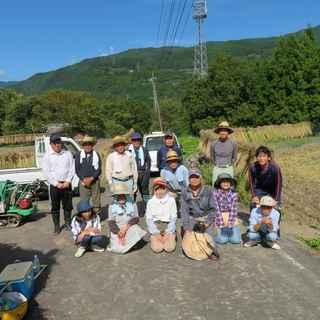 稲刈り本番4.JPG
