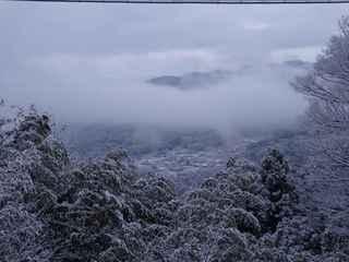 12日の雪景色3.JPG